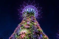 Śródnocni Singapur ogródy Zdjęcie Stock