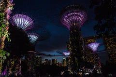 Śródnocni Singapur ogródy Fotografia Royalty Free