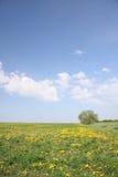 śródpolna wiosna Zdjęcia Stock