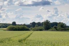 śródpolna zieleni krajobrazu banatka zielone pola pszenicy Obraz Stock