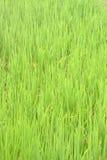 Śródpolne uprawy Fotografia Stock