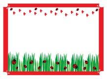śródpolne zielone biedronki Obrazy Royalty Free