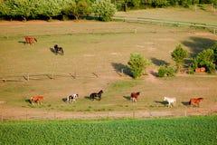 śródpolni konie Zdjęcie Stock
