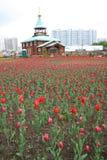 śródpolni kwiaty Obraz Stock