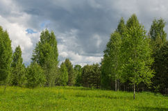 śródpolny drewno Obraz Royalty Free