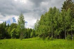 śródpolny drewno Zdjęcia Royalty Free