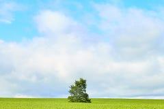 Śródpolny drzewny lato Zdjęcia Royalty Free