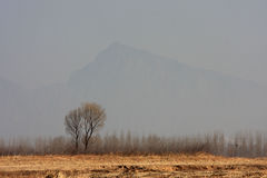 śródpolny drzewo Zdjęcia Stock