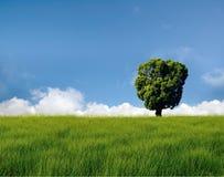 śródpolny drzewo Zdjęcia Royalty Free