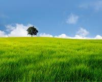 śródpolny drzewo Zdjęcie Royalty Free