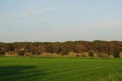 Śródpolny krajobraz z górami i niebem Zdjęcie Stock