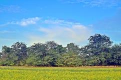 Śródpolny lasowy niebo Obraz Royalty Free