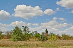 Śródpolny lasowy niebo Zdjęcie Stock