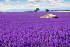 śródpolny lawendowy Provence Obrazy Royalty Free