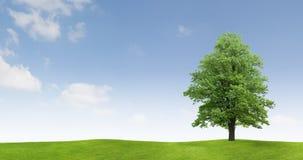 śródpolny wsi drzewo Fotografia Stock