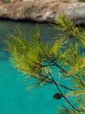 Śródziemnomorska sosna nad turkusowym morzem Zdjęcia Royalty Free