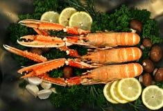 śródziemnomorski cigala homar Obraz Royalty Free