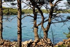 ŚRÓDZIEMNOMORSKI, DENNY, KAMIENNY I drzewo, HVAR wyspa Obraz Stock