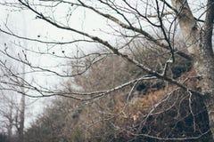 Śródziemnomorski las Zdjęcie Royalty Free