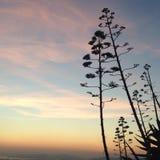 śródziemnomorski niebo Zdjęcia Stock