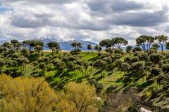 Śródziemnomorskie sosny i góry w Segovia, Hiszpania Zdjęcia Stock