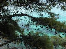 Śródziemnomorskie sosny na Saronic wyspie Obrazy Royalty Free