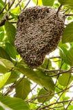 Rój pszczoły obraz stock