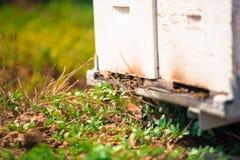 Rój pszczoły zbliżeniem Zdjęcia Royalty Free