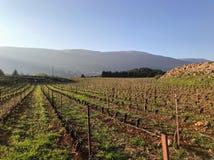 Rôle de raisin Le Liban à l'est milieu image stock