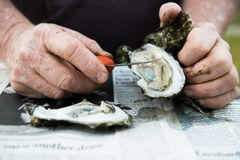 Rôti d'huître avec les huîtres crues sur demi Shell photographie stock