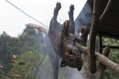 Rôti de porc au Vietnam photos libres de droits