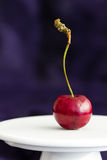 Röd älsklingkörsbär (som är fullvuxen i England) på en vit sockel mot en blå siden- bakgrund med kopieringsutrymme Selektivt foku arkivbild