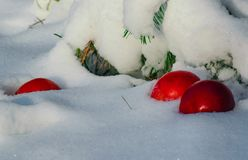 Röd äppleavverkning in i den vita fluffiga snön arkivbilder
