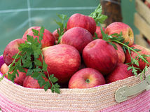Röd äpplekorg Royaltyfria Bilder