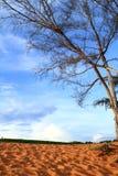 Röd öken på Mui Ne Arkivfoto