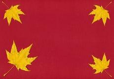 Röd abstrakt höstbakgrund Royaltyfria Bilder