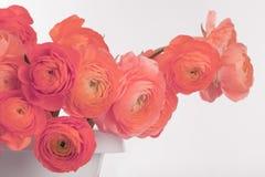 Röd anemonblommabukett Royaltyfri Foto