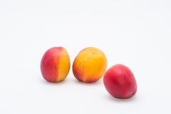 Röd aprikos i vit bakgrund Royaltyfri Fotografi