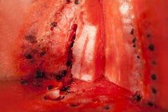 Röd bakgrund av vattenmelon Royaltyfri Bild