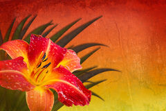 Röd bakgrund för orange yellow med daylily Fotografering för Bildbyråer