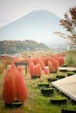 Röd Bassiascoparia och Fuji berg Royaltyfria Foton