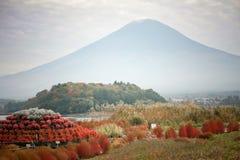Röd Bassiascoparia och Fuji berg Fotografering för Bildbyråer