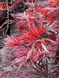 Röd blom Royaltyfri Fotografi