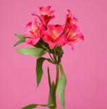 Röd blom- ordning Arkivfoto