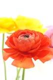 Röd blomma Arkivfoto