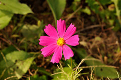 Röd blomma Arkivbild