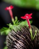 Röd blomma Arkivfoton