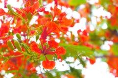 Röd blomma Arkivbilder