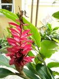 Röd blomma av fåglar av paradiset fotografering för bildbyråer