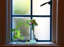 Röd blomma av vasen av fönstret Royaltyfri Bild